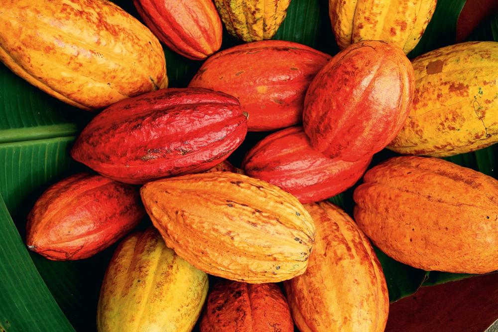 Qual A Melhor Marca De Slow Juicer : Amma Chocolate: organico e brasileiro Sao Paulo Saudavel