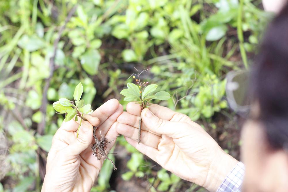 Neide em ação, mostrando as plantinhas