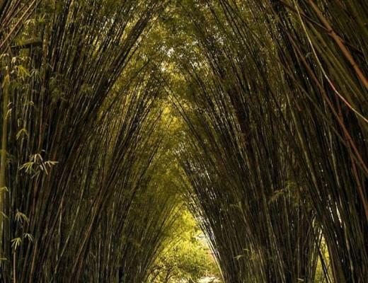 Foto: Parque Ibirapuera Conservação