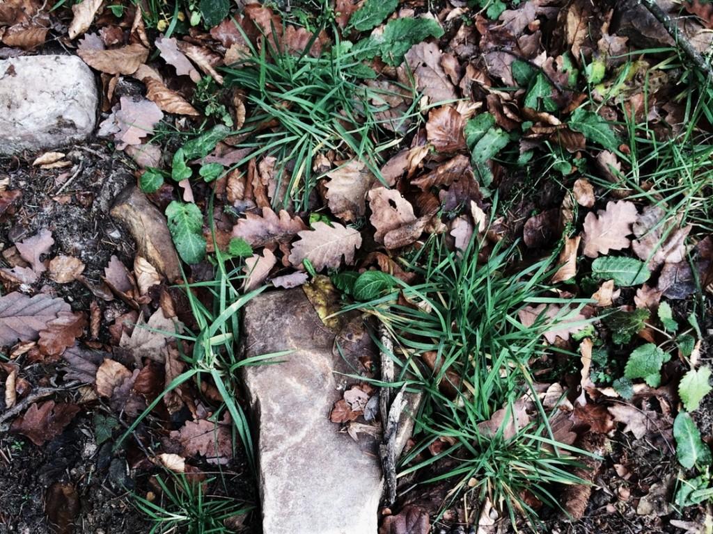 beautiful-soil