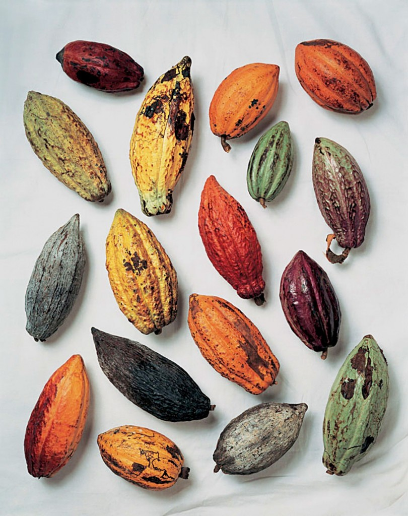 cacau-fruta-chocolate-james-mollison-ickfd